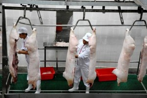Slaughter Pigs in China