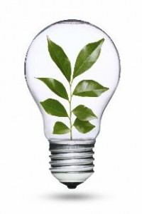 Light_bulb_with_plant